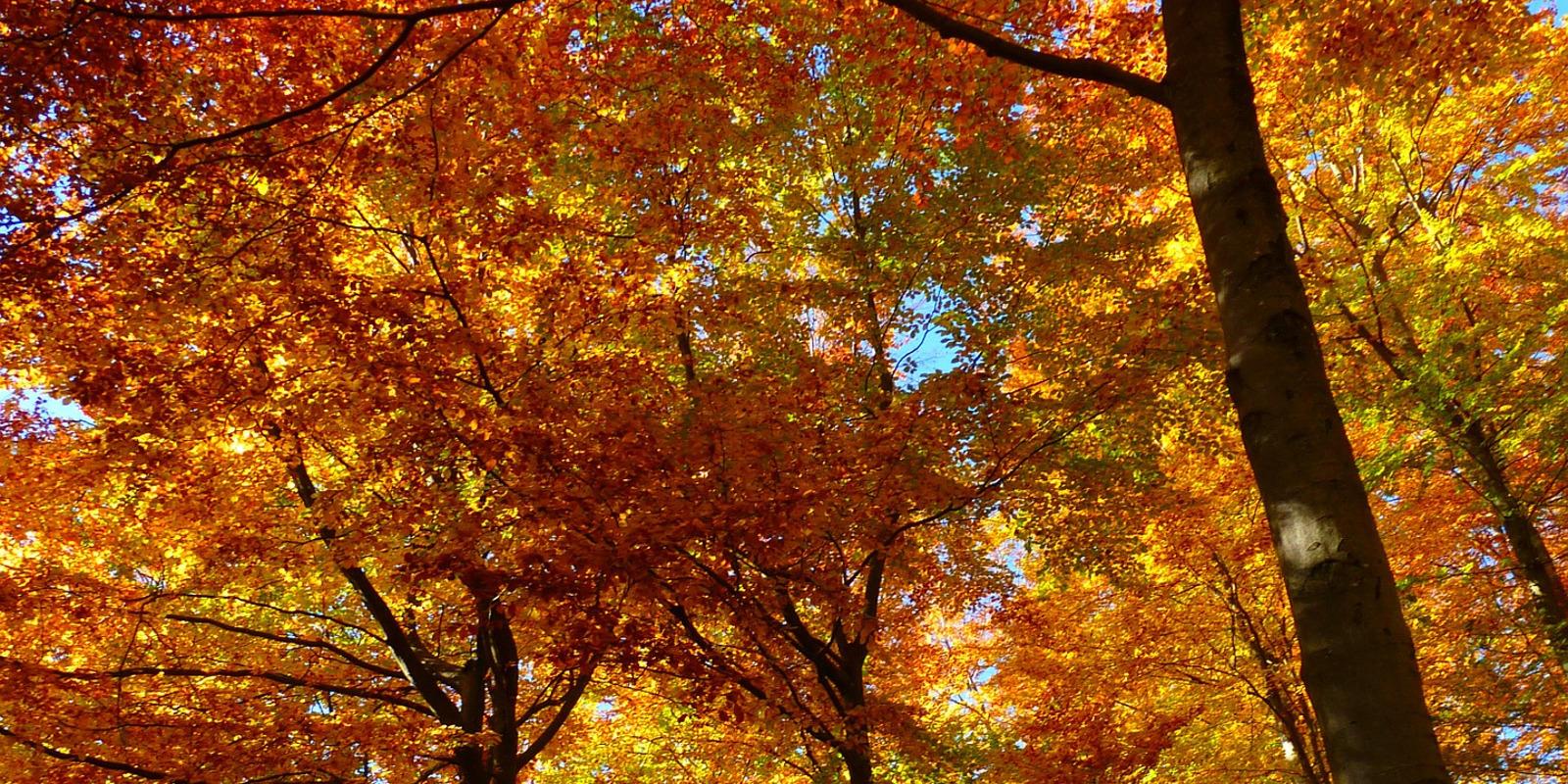 slider-automne-1