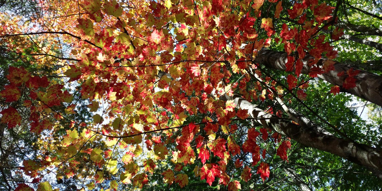 slider-automne-2